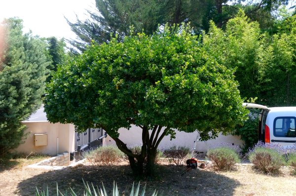 Taille de mise en forme arbuste montagnac entretien des travaux paysagers du randonneur des cimes - Taille des arbustes ...